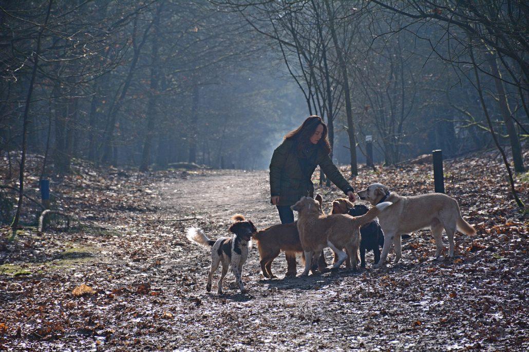 Hondenuitlaatservice Nuenen Eindhoven